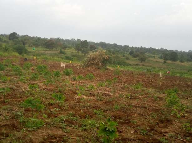 3.61 Acres of Agriculture Land for quick sale in wobulenzi at 8.5m onl Wakiso - image 1