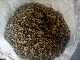 Moringa Seeds are available for pickup