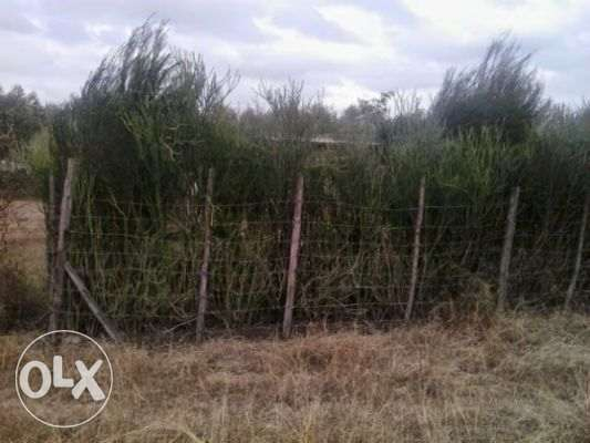 Agent need of money, plot for sale OWNER Ruiru - image 2