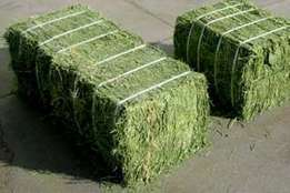 High Quality Lucerne in Bales Size of bale