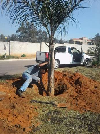 garden maintenance, landscaping and supplies Emalahleni - image 4