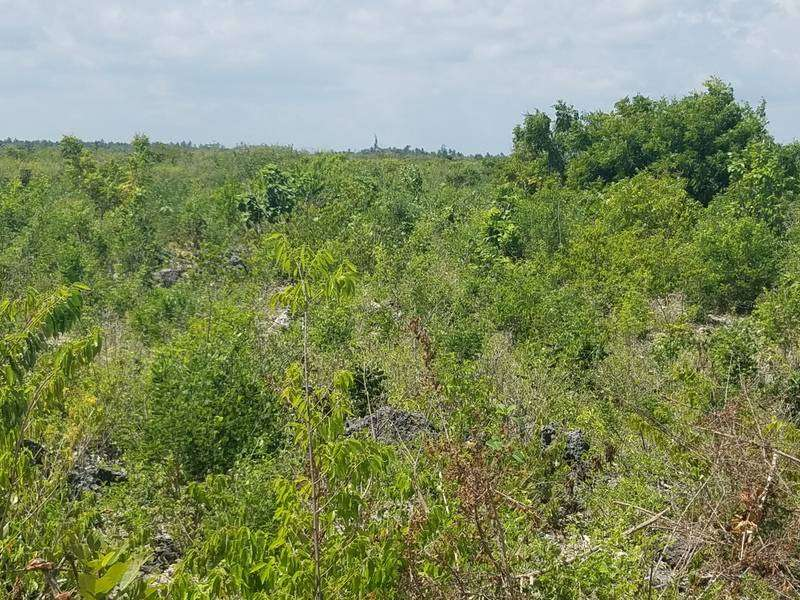 9 Acres Land For Sale In Watamu