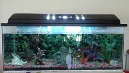Fish tank, 4 foot, fully stocked, R2500.