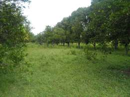 Quarter acre plot with perimeter wall for sale in Nyali.