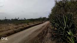 9acres nanyuki laikipia
