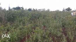 13 acre land on sale in Kanyamwa,7km off Mirogi centre.200,000/- acre.