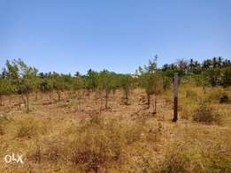 Plot for sale with ready title document
