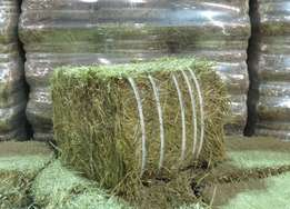Top Quality Lucerne Hay Bales