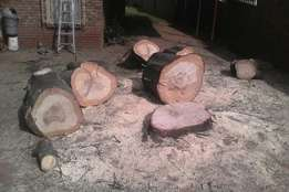 Tree felling , stump removal , site clearance