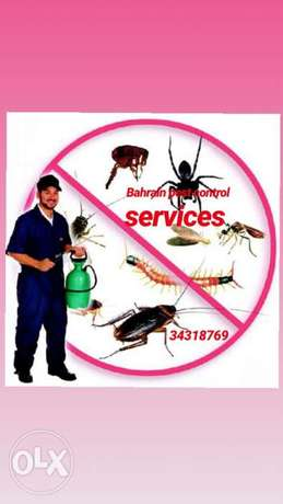 Dream pest control services Bahrain