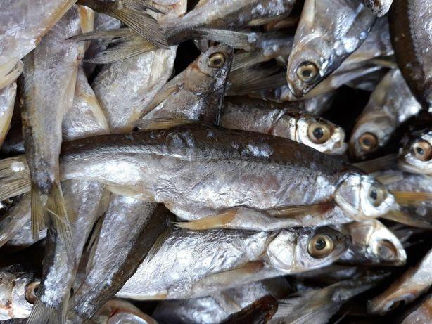 1342d2118bdcfa Тарань ,окунь потрошений,судак,риба до пива. Червоноград - зображення 2