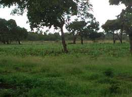 Agricultural land in Msambweni for sale. 19acres