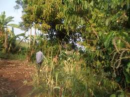 20 acres in luwero Kikyusa at 3m each