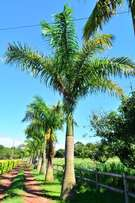 Royal Palms for sale