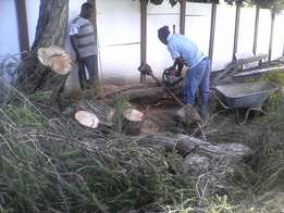 Tree cutting , tree felling