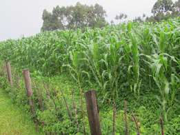 1 to 5 Acre Prime Farming Land for Sale in Kitale