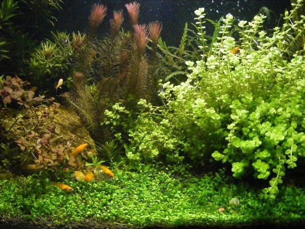 Gb Oświetlenie Led Do Akwarium Bystrzyca Olxpl