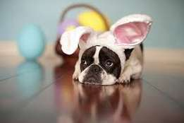 Bring your small Dogs this Easter to Caravan Cove