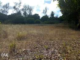 A very fertile land for sale
