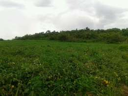 600 acres of land on sale in mityana at 2m per acre