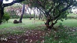 1/2 Acre for sale Next to Nyali police