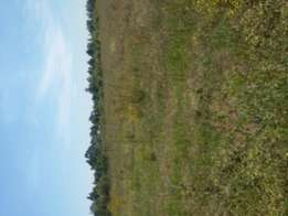5 acres at kabenes sach 4 at 550k per acre