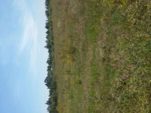 5 acres at kabenes sach 4 at 550k per acre Moi Ben - image 1
