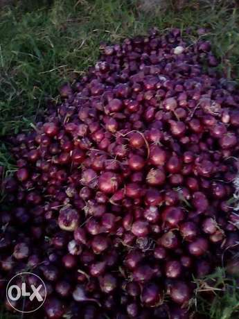 Onions for sale .dry and in store ready for selling. Utawala - image 3