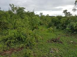 Land for Sale in Kikambala.