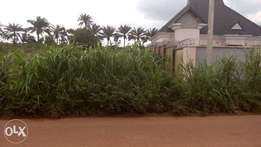 Land in Amuzukwu
