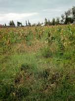 Plot for sale at NGATA NJORO