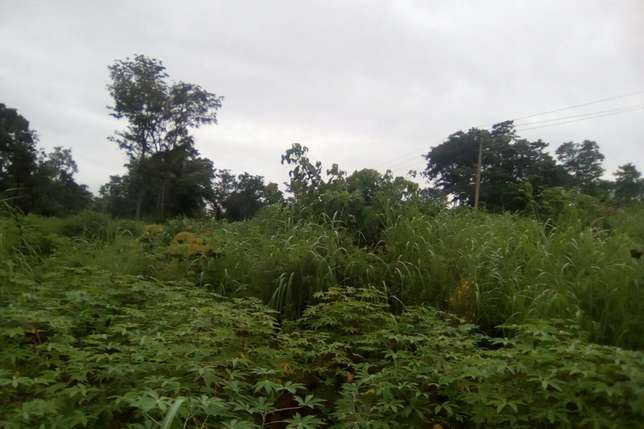 30plots of land located in Ugwuogo nike Enugu East Nigeria Enugu North - image 5
