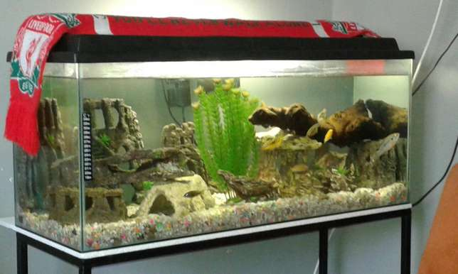 Fish tank with accessories for sale Shallcross - image 2
