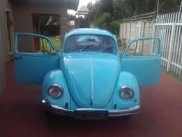 Vw Beetles for sale