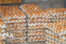 Jumbo Eggs for sale at affordable price