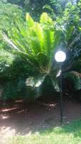 Cycads for sale(with permit)