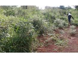 20acres of land on sale in mukono-kasawo each is at 6m