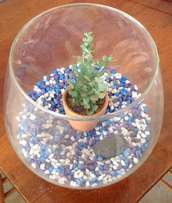 Glass Fishbowl with Plant and Gravel