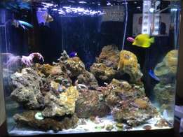Red Sea tank with corals and fish