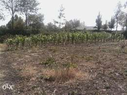1/8 acre plot for sale 120m from tarmac kiserian kahuo