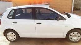 Polo vivo for sale