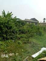 Half Plot FORSALE at Ajao Estate