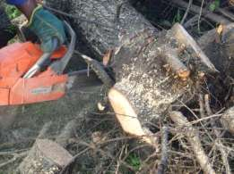 tree felling and rubbish removals