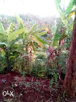 Fertile land one and half acres 3m