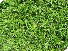 Lm or kikuyu instant lawns & Compost supply