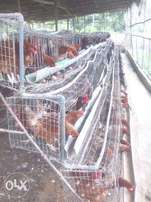 used battery cage 4 sale
