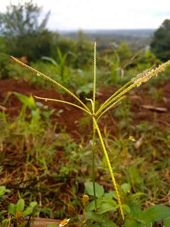 Red soil - 50 by 100 acre plot of Land in Upper Matasia Ngong Township - image 4