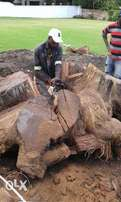 Knowle Tree Services- Stumps uprooting in Port Elizabeth