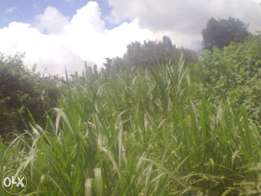 1/4 acre plot Ndumberi Kiambu