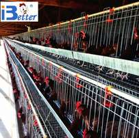 Battery chicken cage for 1020 layers